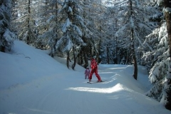 trees ski